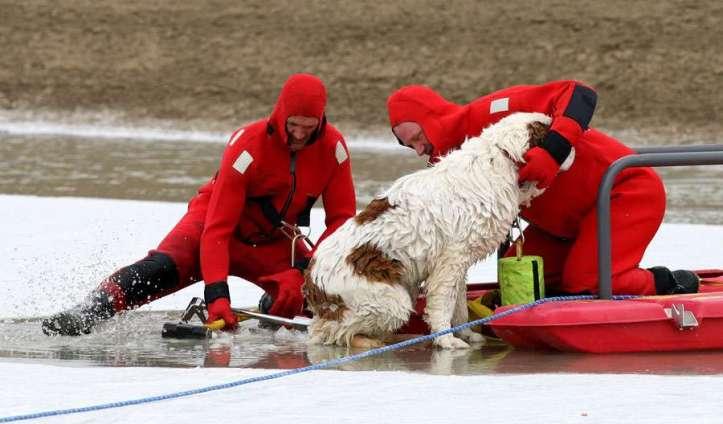 Bernhardiner-Hund-festgefroren-Billings