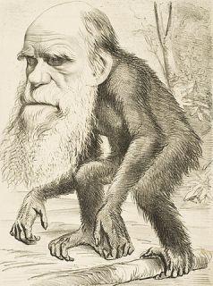 Karikatur von Charles Darwin von 1871